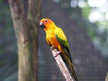 一只五颜六色的鹦鹉鸟 免版税库存照片