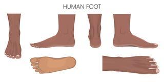 一只人脚的不同的看法在白色background_Anatomy非洲的 向量例证