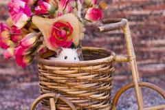 一只仓鼠 免版税库存照片