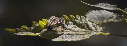 一只休息的蝴蝶 免版税库存图片