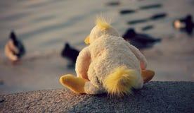一只作为鸭子的被充塞的鸭子手表坐冰在莫斯科,俄罗斯 库存照片