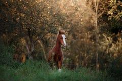 一只俏丽的驹在夏天小牧场站立 库存图片