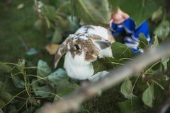 一只兔子的画象在庭院里 免版税图库摄影