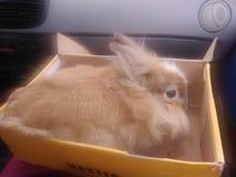 一只兔子 免版税库存图片