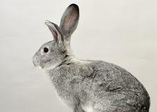 一只兔子 库存图片