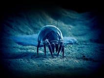 一只共同的尘土小蜘蛛 皇族释放例证