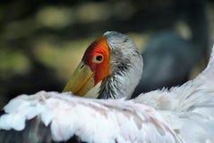 一只兴高采烈的白色鸟的画象 免版税库存图片