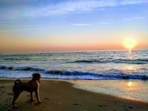 一只卷毛狗遇见黎明在海边 库存照片