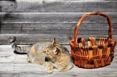 一只厚实的猫在一个空的柳条筐谎言旁边位于a 免版税库存照片