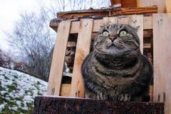 一只厚实的猫的滑稽的神色 库存照片