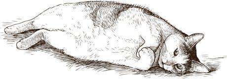 一只厚实的说谎的家猫的剪影 库存图片