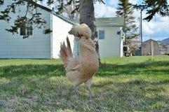 一只古怪的鸡 免版税库存照片