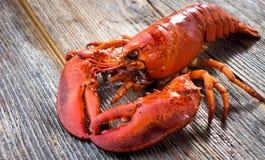一只可口新近地煮沸的龙虾 免版税图库摄影