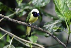 一只可爱和喧闹的异乎寻常的鸟 库存图片