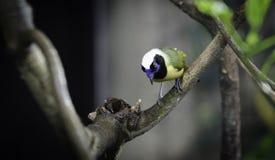 一只可爱和喧闹的异乎寻常的鸟 库存照片