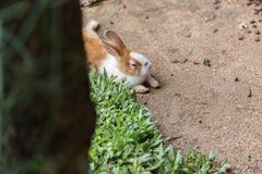 一只可爱的兔子 图库摄影