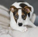 一只可爱的小狗的画象。 库存照片