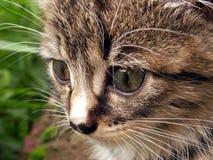 一只哀伤的小猫的画象 免版税库存照片