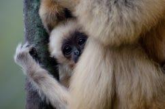 一只哀伤的小的猴子 免版税库存照片