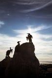 一只在莫克姆的美丽的鸟雕象沿岸航行 免版税库存图片