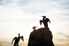 一只在莫克姆的美丽的鸟雕象沿岸航行 免版税库存照片