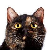 一只多彩多姿的猫的纵向 免版税库存照片