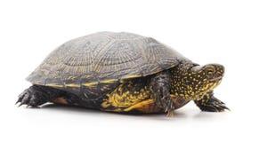 一只大乌龟 免版税库存照片