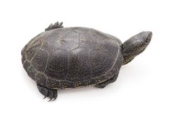 一只大乌龟 免版税库存图片