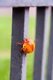 一只大明亮的橙色甲虫的小雕象 库存照片