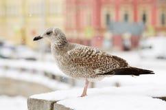 一只大海鸥坐桥梁的栏杆 免版税库存照片