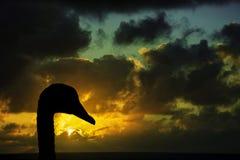 一只天鹅的剪影与日出的在风暴前的海洋在背景中 免版税库存照片