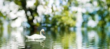 一只天鹅的图象在水的 免版税库存图片