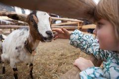 一只女孩哺养的山羊 免版税图库摄影