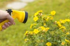 一只女性手拿着水厂的一台喷雾器 免版税图库摄影