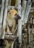 一只好奇和逗人喜爱的小狗 库存照片