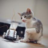 一只好奇小猫和吉他 库存照片