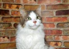 一只好奇惊奇的猫的画象 库存照片
