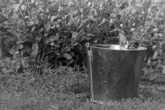一只好奇矮小的毛茸的小猫 免版税图库摄影