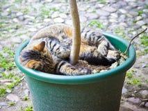 一只好的猫睡眠 免版税库存图片