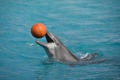 一只嬉戏的海豚 库存照片