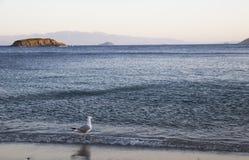 一只孤独的海鸥在海滨站立反对背景  免版税库存照片