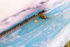 一只孤独的蜂 免版税图库摄影
