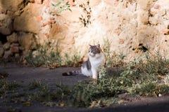 一只孤立猫取暖在阳光下 免版税库存图片