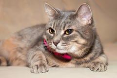 一只家猫的纵向 库存照片