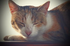 一只家猫的画象与葡萄酒作用的 库存图片