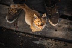 一只小农村猫 免版税库存图片