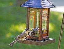 一只小北美山雀在鸟饲养者栖息。 图库摄影