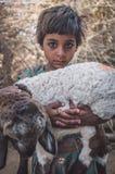 一只小女孩和羊羔 图库摄影