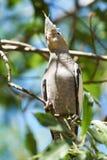 一只小形鹦鹉在它的自然生态环境 免版税库存图片