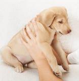 一只小狗 库存图片